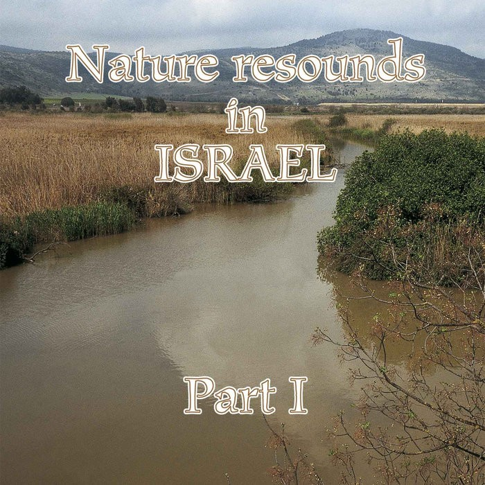 Lauri Hallikainen - Nature Resounds in Israel - Part I [WEB] [2006, FLAC, (tracks)]